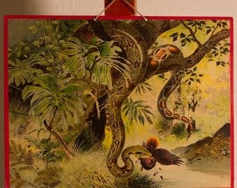 Vintage  Old Print on cardboard  The Snake School Chart Lithograph