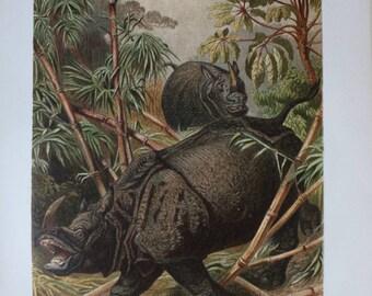 nice old print rhino 1895