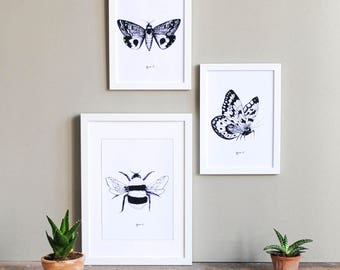 Insect Illustration Print Set