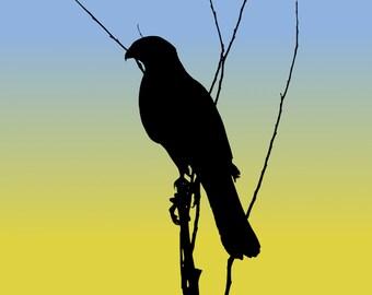 DIGITAL DOWNLOAD - Cooper's Hawk Silhouette at Sunrise