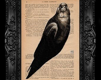 Crow. Nº 13. Pencil and ink drawing on page of French publication of the 1930 illustration. The measurement of the leaf is 28 x 19 cm.