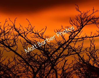 Trees At Sunset Photo Print