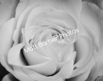 Monochrome Rose Canvas (Large)