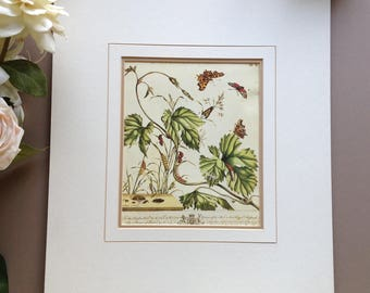 """Vintage Moses Harris Matted Print of the """"Comma Butterfly, Burnet Moth and the Plumed Moth"""", Plate 1 from his 1766 Book THE AURELIAN"""