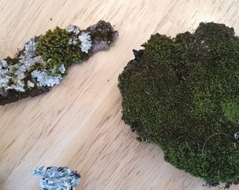 4 Mossy Pieces of bark and Moss for your wedding or crafting (#5)