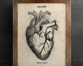 Anatomical Heart Print, Anatomical Heart, Heart Anatomy Print, Anatomy wall art, Anatomy Print, Medical Student Print