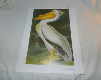 White Pelican / White Tailed TropicBird prints - 1 Page from Audubon's Birds of America Baby Elephant Folio c. 1990 Ready to Frame Art 55-27