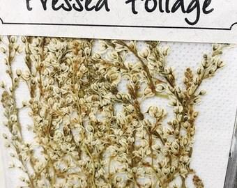 Silver Lace vine 20 Flowers  SALE