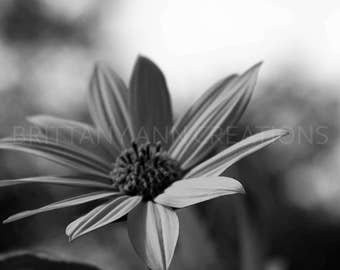 Black and White Flower Photography, Nature Photography, Floral Photography, Fine Art Photography, Home Decor, Flower Photography