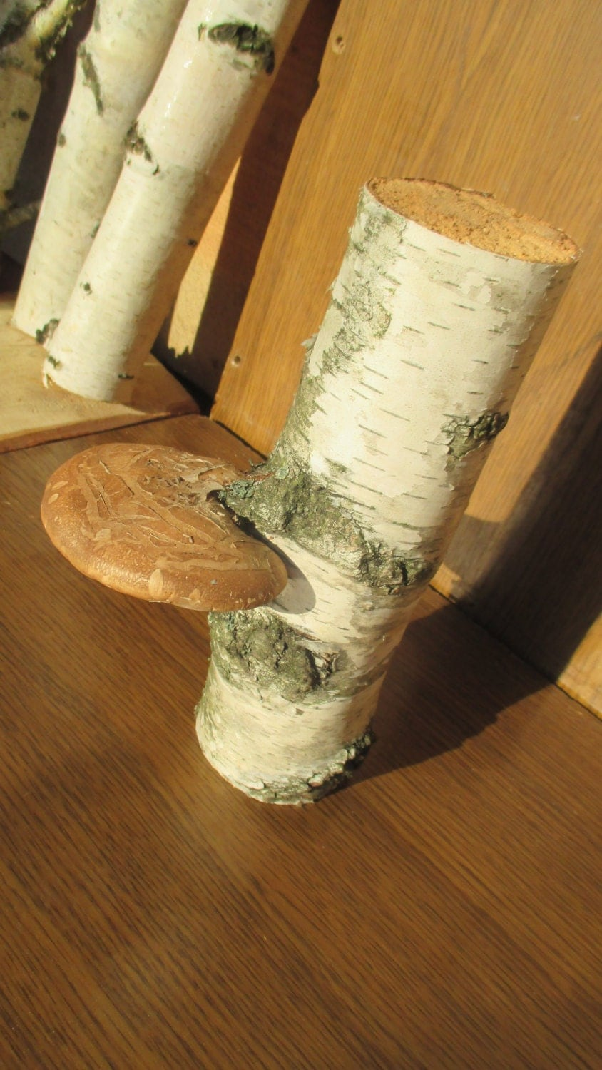 Sale 25 Decorative Birch Tree Log With Fungus Tree Fungi Rustic Home Decor Craft Supply