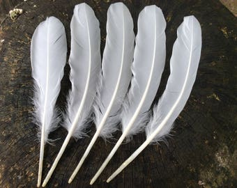 """5 x white goose feathers approx  9"""" long naturally moulted"""