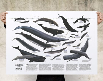 Whales Art Print Poster