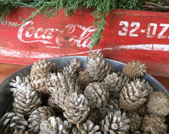 Lot of 45 Small Bleached Scotch Pine Cones, Craft Supply, Rustic Wedding,Holiday, Christmas Decor, Cottage Chic/Shabby Chic