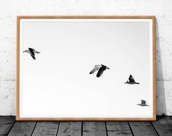 Minimalist Print, Seagull Art, Seagull Print, Minimalist, Wall Art, Digital Print, Minimalist Printable Art, Black and White, Wall Art Print