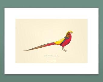 Golden pheasant Printable art #004