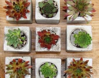 succulent favors, wedding favour plants, mini succulent favours, concrete favour, geometric planter, wedding plants, mini succulent pots uk