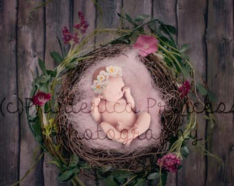 ROSES Digital Backdrop Nest Baby & Newborn Photography