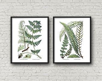 Botanical Print Set, Vintage, Botanical Illustration, Fern Print, Botanical, Diptych, Wall Art Set of 2, 2 Piece Wall Art, Printable Art