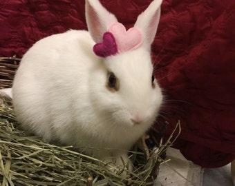 Pet Rabbit Heart Accessory, Pet Rabbit Accessory, Pet Rabbit Costume, Pet Rabbit Heart Headpiece, Heart