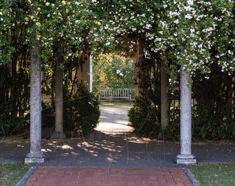 Garden Serene