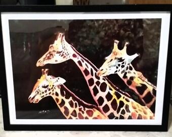 Unframed A3  Watercolour Print-  Giraffes - Wall Art Decor Limited Edition