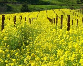 Wild Mustard Flower Essence