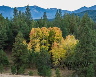 Forest, Fall, Aspen, Mountains,