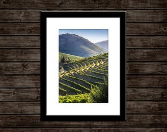 "Portugal Photo Print | ""Douro Vineyard Rows"" 