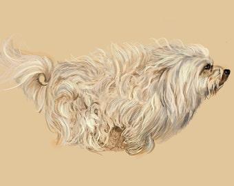 Havanese Dog Art - Fine Art Print