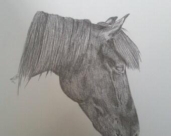 5x7 pencil portrait of your pet