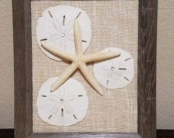 Framed Sand Dollar & Starfish