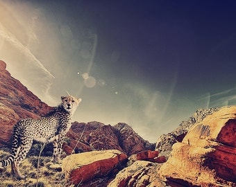 Cheetah on the Rocks