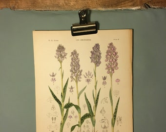 Antique Botanical Print 1921. Orchids. Hand finished lithograph. Ready to frame wall art / vintage poster. Perfect Gift