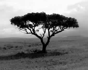 Breathe - Photograph of an Acacia Tree in Serengeti National Park
