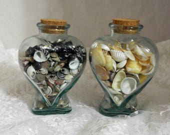 Two Bottles of Small Shells for Crafting or Collecting