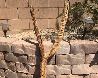 cholla Forked Teddy Bear