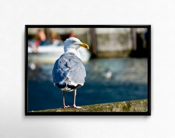 sea gull is waiting, Photoprint, Art, Printart - Poster, Acrylic, PVC foamboard, canvas print