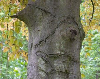 Breast picture tree Park Renaissance