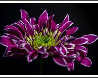 Spectacular Purple Flower