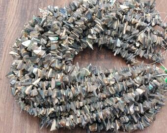 "Paua Abalone shell chip beads full 16.5-17"" strand"