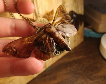 Medium moth necklace