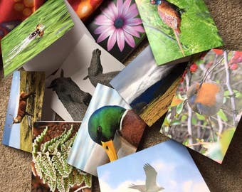 Selection of Photography Greetings Cards