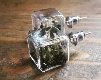 Terrarium Cube Studs