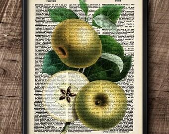Apples · Instant Download · Dictionary · Vintage · Fruit · Printable · Digital File #105