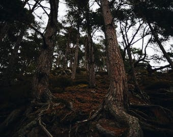 Trees At The Falls Of Foyers, Scotland