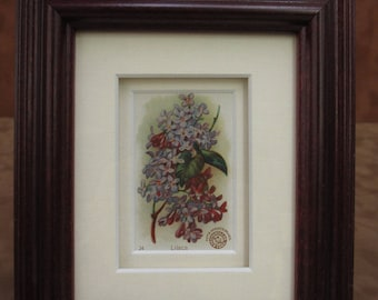 Framed Vintage Lilac Card