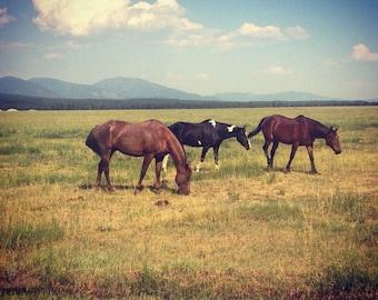 Montana Dudes, canvas print, Montana, horses, landscape, photography