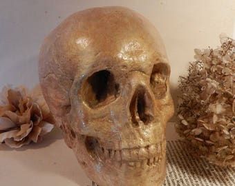Skull, the Gold Digger