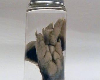 Real Preserved Wet Specimen Opossum Feet