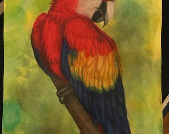 Prismacolor Watercolors and Colored Pencil Parrot